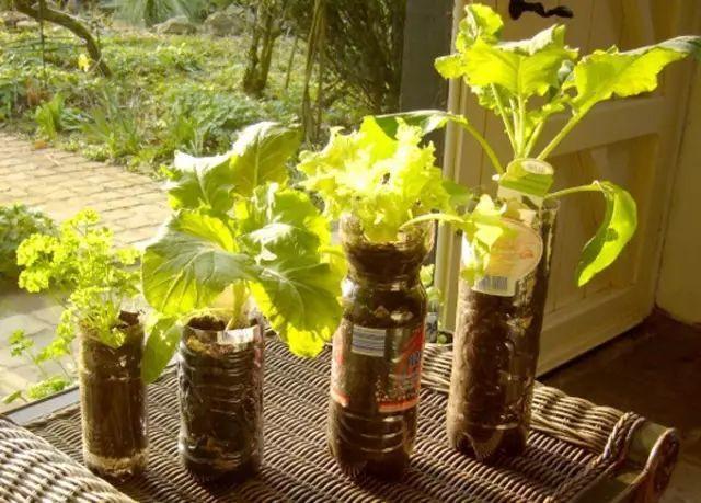 《太神奇!她用一个塑料瓶种出的蔬菜,一年都吃不完!》